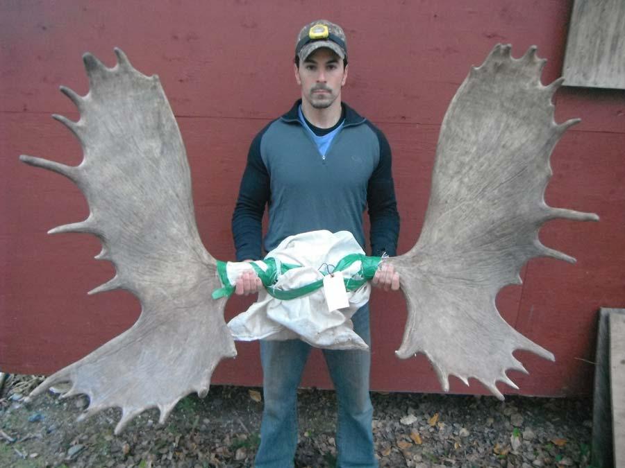 Northern British Columbia Moose Hunting