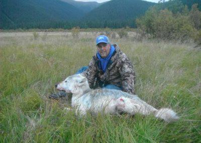 Northern British Columbia Wolf Hunting