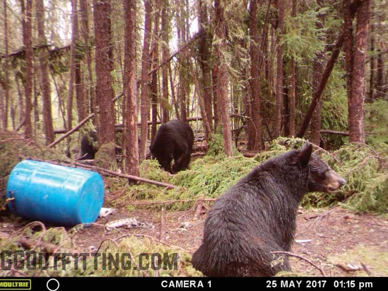 Saskatchewan Black Bear Hunting And Outfitting