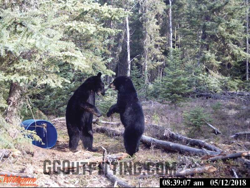 Black Bear Hunting In Saskatchewan