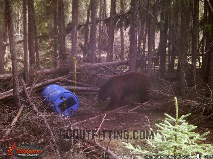 Black Bear Hunts In Saskatchewan