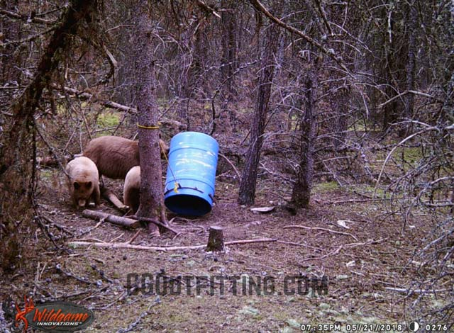 Black Bear Hunts With Gunson Guiding And Outfitting