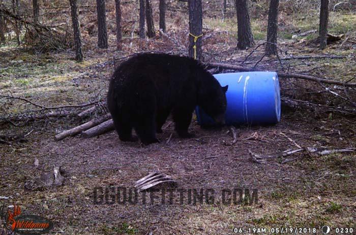Saskatchewan Black Bear Hunts
