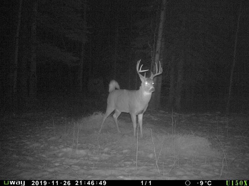 saskatchewan deer hunting