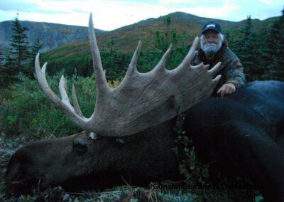 Early season mountain moose