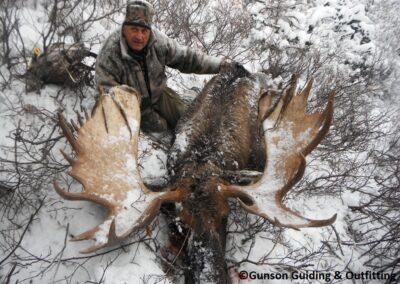 Huge October Bull moose