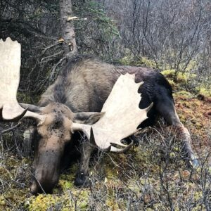 Northern Canadian Moose Hunting